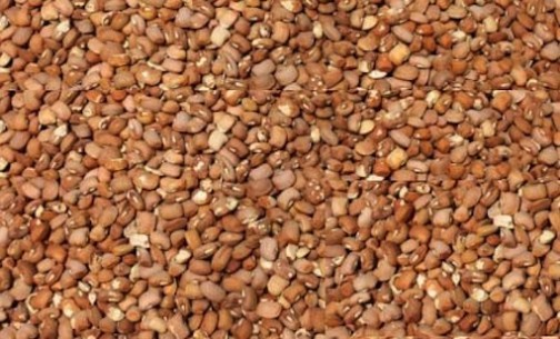 NAFDAC bans foreign unscreened beans