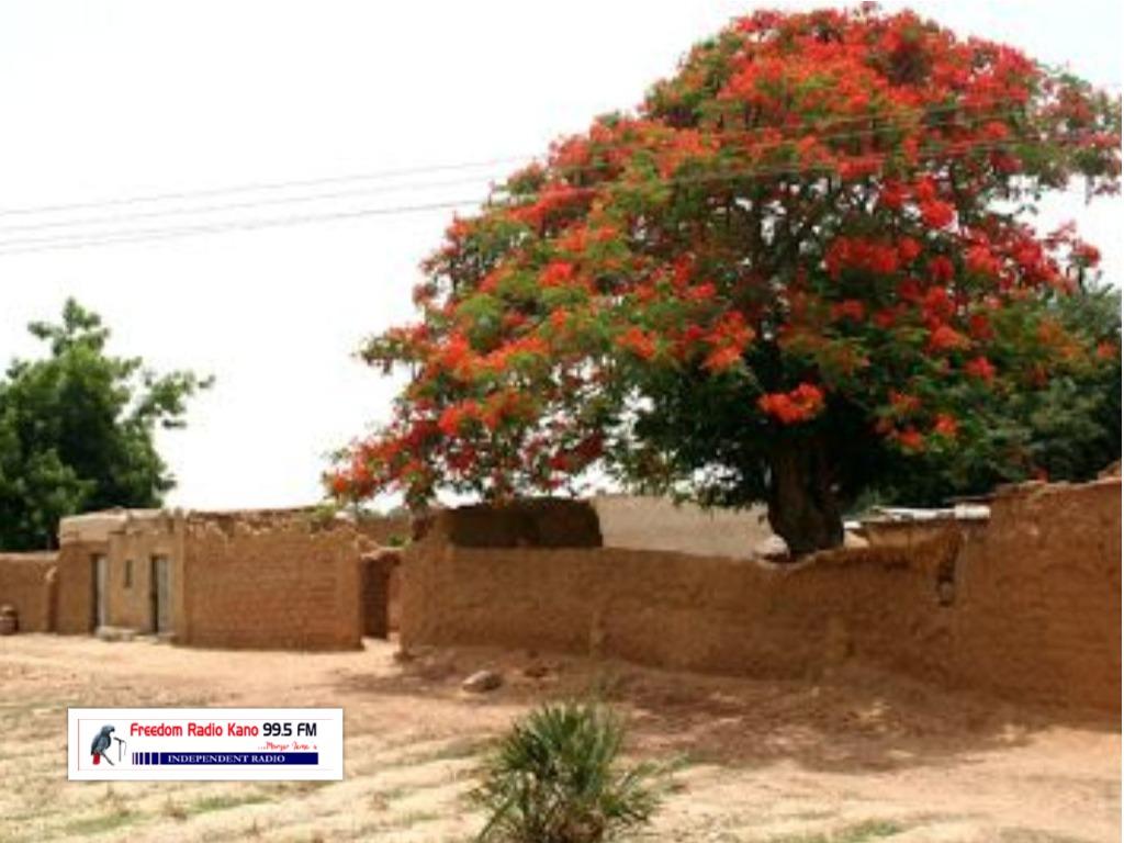 Garin da ake aure akan naira dubu hamsin (N50,000) kacal a Kano